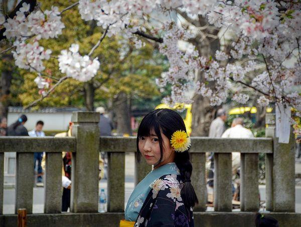 Thiếu Nữ Nhật Bản Mùa Hoa Anh Đào 2016